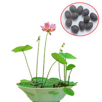 buy 3 get 120 pcs 20 colors bowl lotus flower plants lotus seed plant bonsai Lotus seeds teach you How to Plant home Garden Free