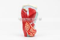 Larynx model