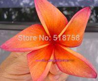 10 SEEDS - 100% Genuine Fresh Rare Plumeria Rubra Egg Flower Tree Seeds * Free Shipping (PR00022)