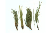 500g ma huang ephedra sinica tea Chinese herbal medicine free drop shipping
