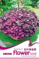 build your garden! 2pcs/lot,Romantic purple lucky grass  Four Leaf CloverSeeds LF043