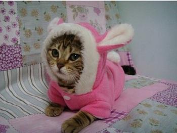 Одежда для животных для собак и кошек, милой картины кролика , китайские дешевые домашних животных пальто / носить / одежда / одежды поставщика бесплатной доставкой