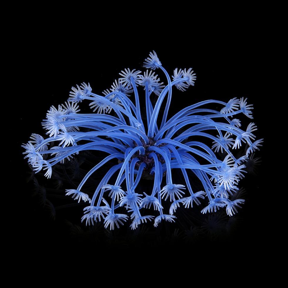2014 seconds kill direct selling automatic fish feeder blue artificial fake coral for fish tank aquarium decoration ornament()