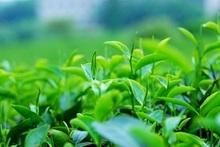 Free Shipping Chinese YunNan Pu Er Ripe Shu Tea MengHaiZaoChun 357G made in 2012
