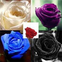 2014 New Lovely 20 Pcs Rose Seeds Flowers Bonsai/Rare Purple Black White Red Blue Rose Seeds