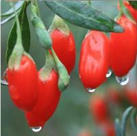 1000 SEEDS - China Top Quality Super Big Goji Berry Seeds Lycium Barbarum goji berries fruit seeds * Free Shipping