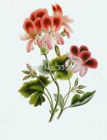 Decorate flowers bloom Painting Air Brushing  Painting no Frameless oil painting spray painting,inkjet printer