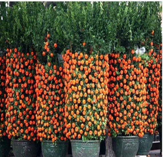 Acheter 2014 real new plantes d 39 ext rieur for Plante exterieur hiver