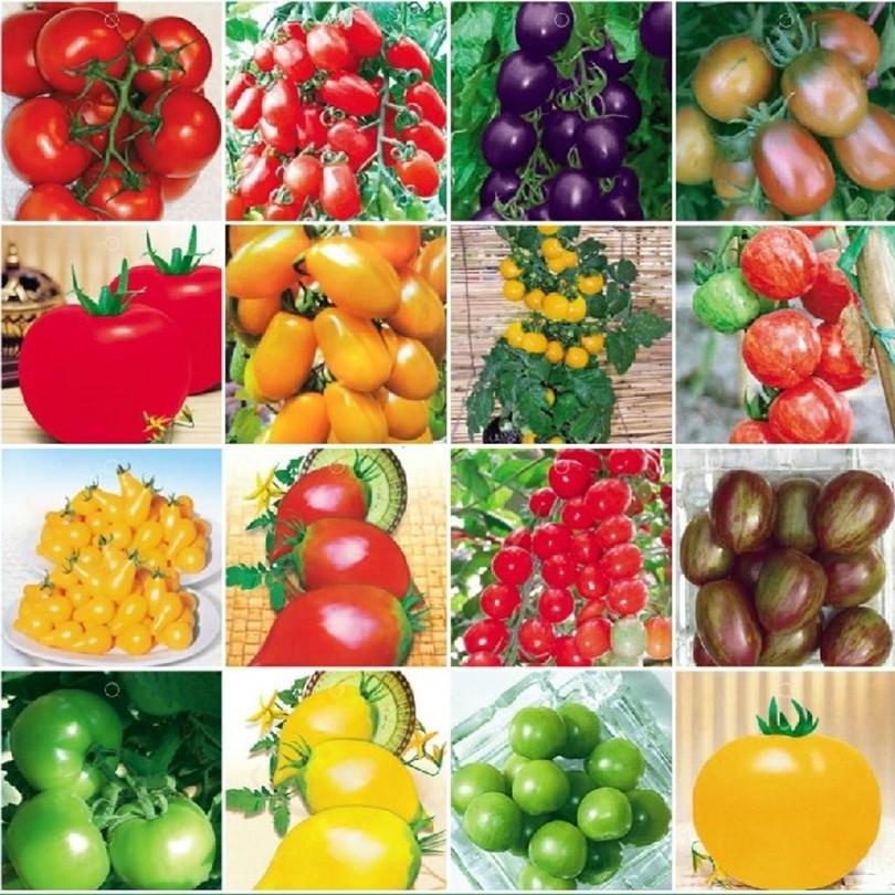 de tipos vegetales de China, vendedores de tipos vegetales en