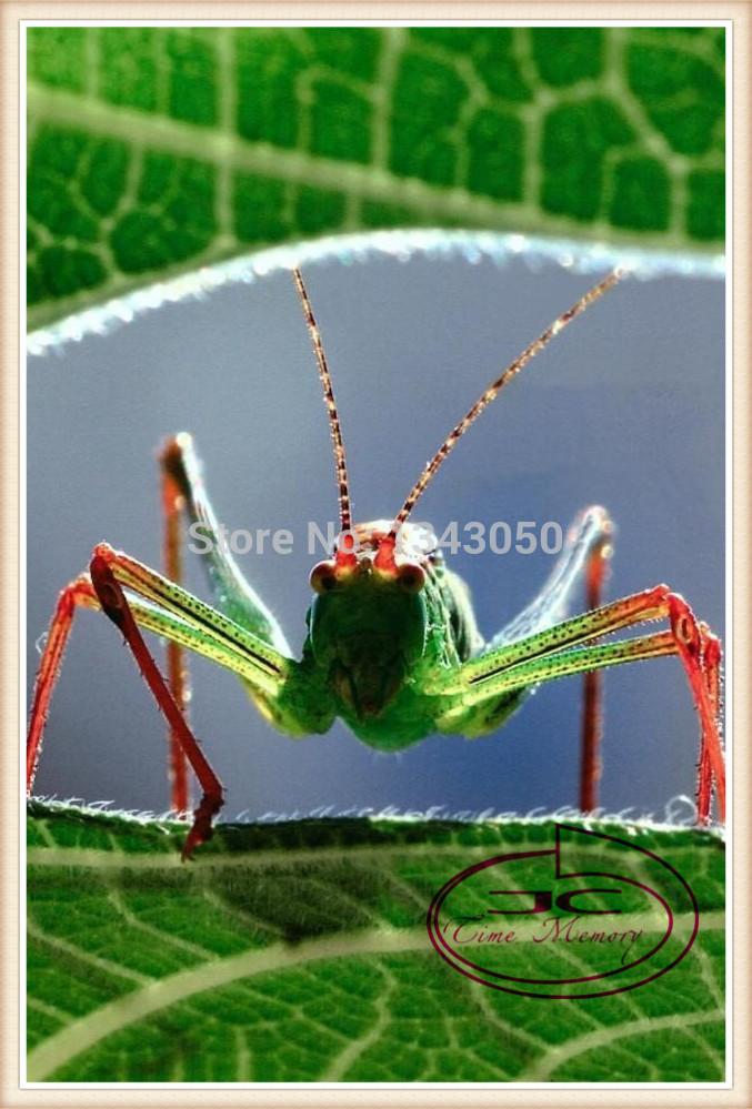 2014 new freeshipping animal style diy diamond painting diamond cross stitch paint green grasshopper decorate the room40x59cm(China (Mainland))