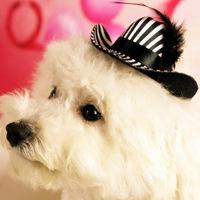 Fashion pet stripe feather hat Designer dog cat black & white stripe hat Chihuahua kitten hairclip Pet accessory Free Shipping