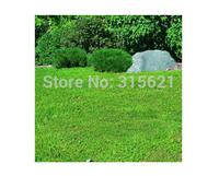 Green Carpet(Herniaria Glabra) Seeds Grass Seeds 50pcs Drought-resistant perennial evergreen dwarf light green Free Shipping