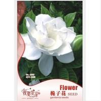 1 Bags 20 pcs arabian jasmine gardenia flower seeds, rare white and fragrance, cape jasmine flower Can be used as a medicine
