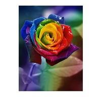 New Rainbow rose seeds Rose Seeds Beautiful Flower  200 PCS  Free shipping
