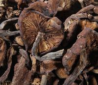 FREE SHIPPING china Dehydrated mushroom,Dry wildness,Hazel mushroom