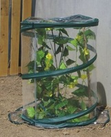Pop up greenhouse in 50DIA X 70H CM. Free shipping