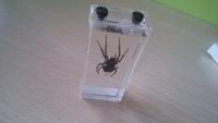 """Wet Specimen """"Spider"""""""