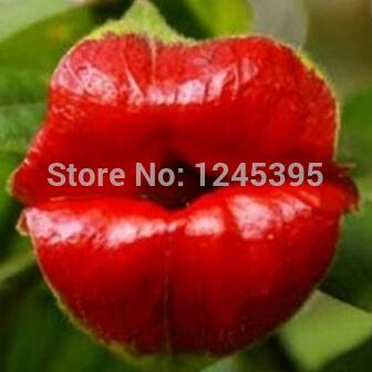 100pcs/bag Psychotria Elata Flower Lips seeds like sexy lips Bonsai plants Seeds for home & garden Flower Seed(China (Mainland))
