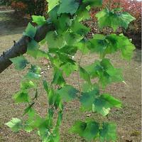 (10 pieces/lot) artificial vine grapes leaves plastic rattan home decorations 240cm
