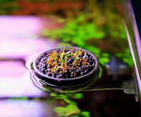 ETB MIni grow pot  Aquarium Ornament for grow  mini plants  ( seeds attached )