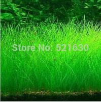 Free shipping aquarium grass plants water plants seeds 500 pcs