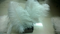 "HOT SALE ! 100pcs/lot 30-35CM /12-14"" WHITE Ostrich Feather Plume wedding decoration FREE SHIPPING"