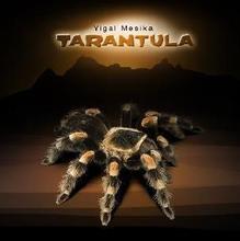 Tarantula by Yigal Mesika   (China (Mainland))
