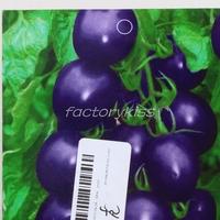 Free Shipping 20pcs Purple Tomato Seeds Garden Organic Fruit Vegetable Natural Plants Blub 4 4003-757