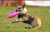 Free shipping Silicone Soft Frisbee Frisbee dog toys, dog Frisbee dog training supplies diameter 17.5CM