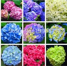 Free shipping 9 kind rare Flower seeds 20/bag purple Hydrangea Viburnum macrocephalum seed flower pot planters(China (Mainland))