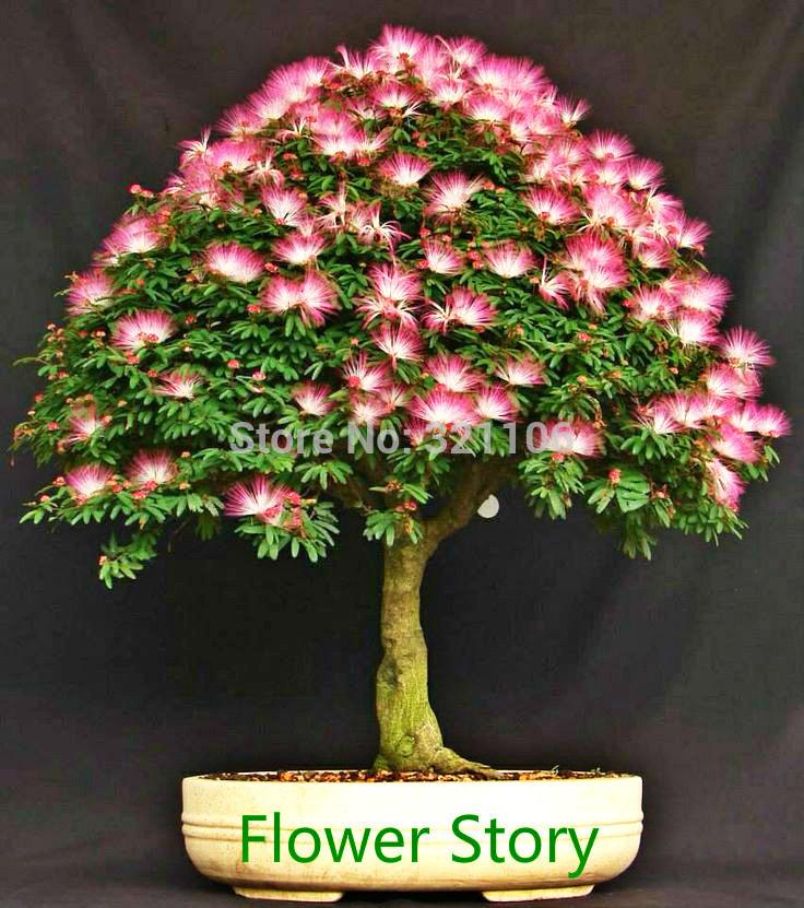 Silk Bonsai Trees Silk Tree)--mini Potted