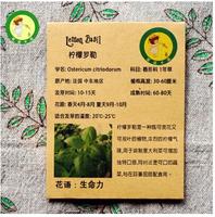 Lemon Basil -25seeds