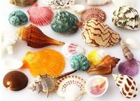 070644  0.5kg/lot  conch shells combination aquarium landscaping floor wall stickers home decoration ornaments