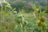 DIY Home Garden Plant 10 Seeds Lespedeza Capitata Flower Seeds Free Shipping
