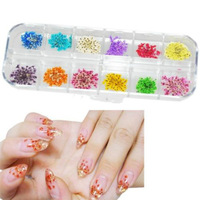 New Hot 12 Colors Real Dry Dried Flowers Nail Art Decoration DIY Tips Free Shipping 2014 free shipping