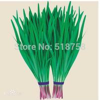Free Shipping 1Pack Purple root leeks Seeds vegetables Seeds