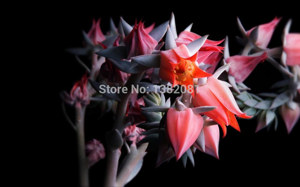 New Arrivals 100 bonsai garden plant seeds succulent cactus garden plant flower seeds free shipping(China (Mainland))