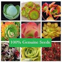 100% Genuine Seeds 60PCS MIX Mis Aeonium Sedum potted plants colorful obconica succulents fleshy meaty plant seed