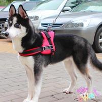 Multipurpose big Dog Pulling Big Dog Harnesses in large dogs pulling Sheng Samo Golden Harness Vest