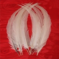 """EMS freeshipping! 50Pcs/lot! 26-28"""" 65-70cm Super Long Natural Silver Pheasant Tail Feathers,Silver Pheasant Tails"""