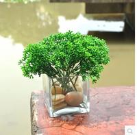 Little  Mini Milan pastoral style silk flower artificial grass plant home decoration Green grass  MA1588
