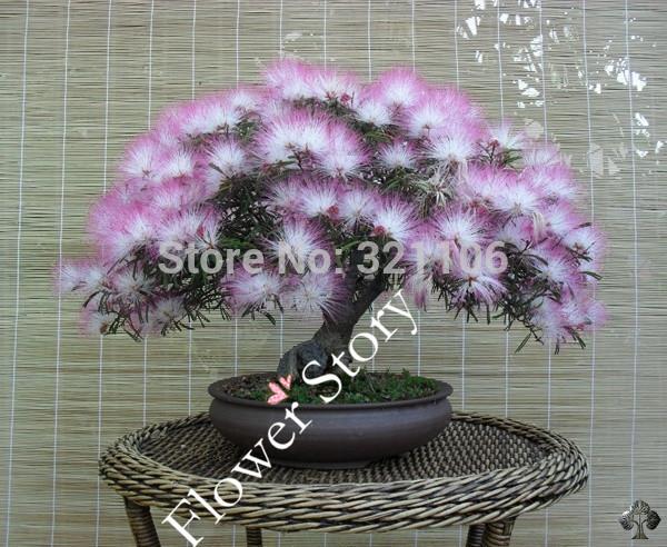 Silk Bonsai Trees Tree Mimosa/persian Silk
