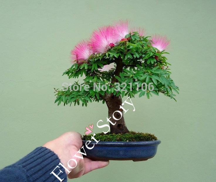 Silk Bonsai Trees Silk Tree)--mini
