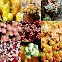 DIY Home Garden Succulent Plant 20 Seeds Rare Sedum Mixed Seeds Free Shipping