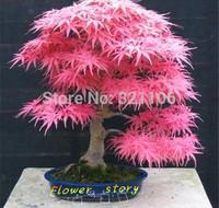 20 Mini Beautiful Japanese Red Maple Bonsai Seeds, DIY Bonsai * FRESH MAPLE  SEEDS * Free shipping