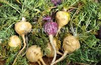 New Home Garden Plant 150 Seeds Maca Seeds, Peruvian Ginseng, Peruvian Super Organic Food Free Shipping