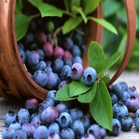 BLUEBERRY SEEDS BONSAI TREE 100PCS WITH 20 PCS/ BAG IN TOTAL 5 HERMETIC PACKAGES DIY HOME GARDEN FRUIT SEEDS FREE SHIPPING