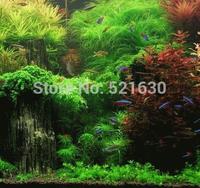 18 species of aquatic plants the seeds mixed aquarium fish tank planting pond Purifying water quality aquatic plants  1000 psc