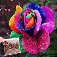 Wholesale 500pcs/Lot Hot Sale New Rare Holland Beautiful Flower Rainbow Rose Seed Home Garden