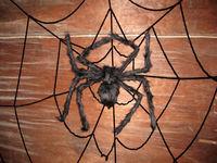 Black Spider Halloween Prop Big Spider Webbing Indoor Outdoor Bar Decoration   95707